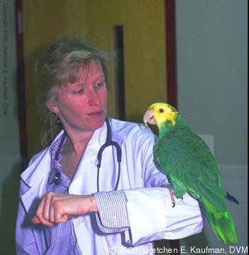 Zoo Med 2008: Psittacine Medicine (2008)
