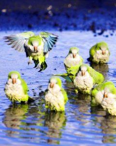 7 Edge of your seat tantalizing heart pounding bird bathing videos