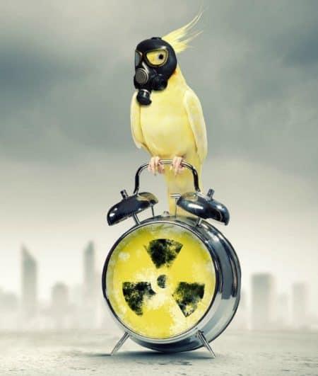 My birds don't diminish my air quality – doc.