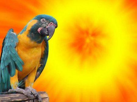 Birds and full spectrum lighting. We got it wrong.