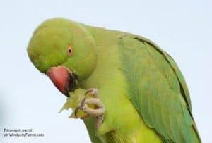 Is organic bird food really better for my bird?