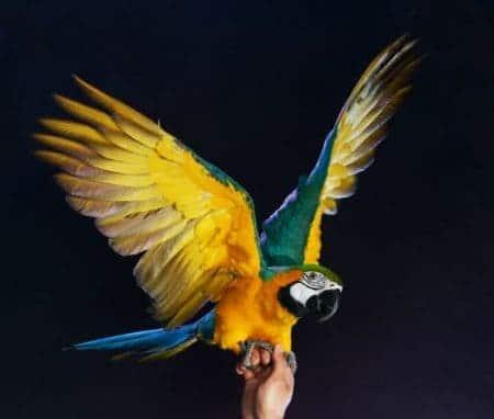 A Conversation with Glen Glendell, UK Parrot Behaviorist: Biting Parrots (Topic 1 of 3)