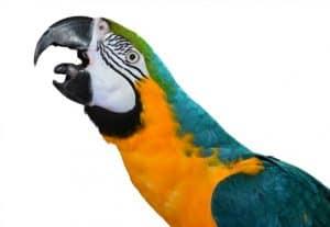 WHY DOES MY BIRD SCCCCRRRREAMMM?