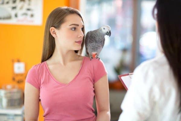 Let's place the burden of  bird behavior on humans not birds