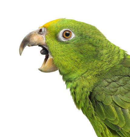 5 Ways to reduce hormonal bird behavior before you see the avian vet
