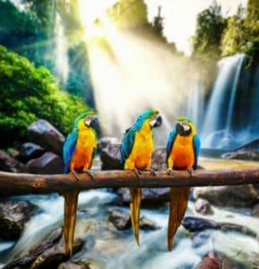 Does uv light really help produce vitamin d3 in birds?
