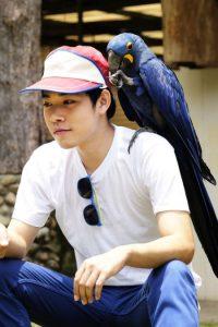 Windy City Parrot Defines Large Species of Pet Birds