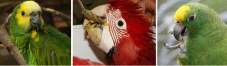 Bird food pellet conversion made easy