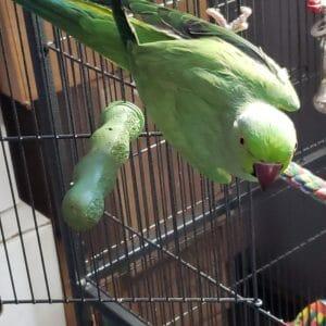 By Bird Size