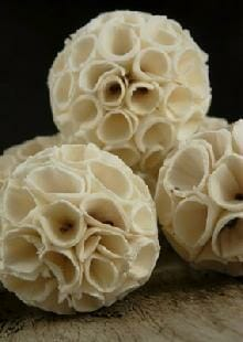 Munchie Sola Sea Cabbage Balls For Birds 3 pc