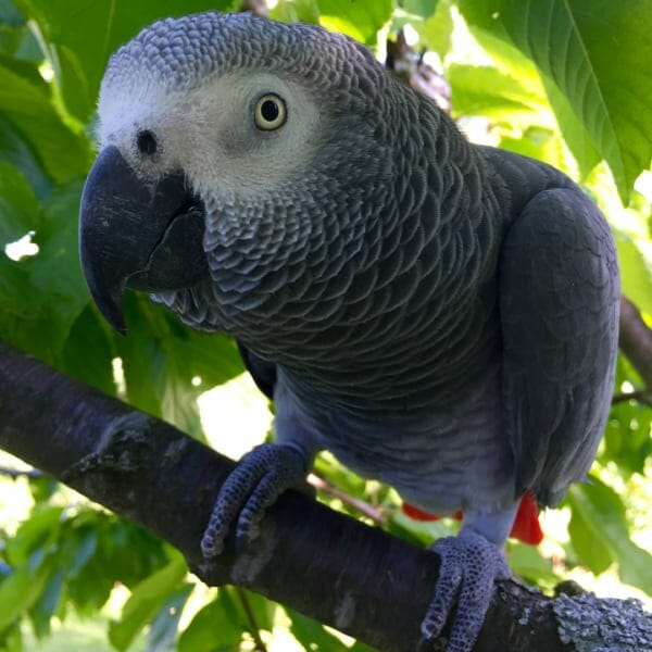 Will Bright Full Spectrum Lighting Cause My Bird to Go Blind?