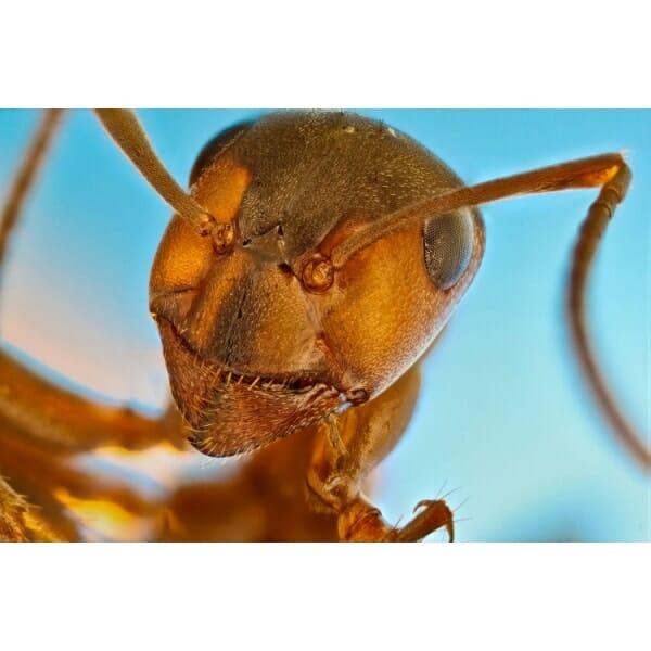 Learn how gordon controls bird cage ants w/ isopropyl alcohol