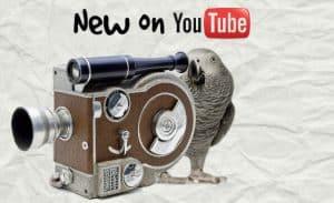 Our Favorite YouTube Bird Videos