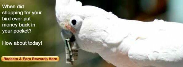 cockatoo with folded dollar in beak