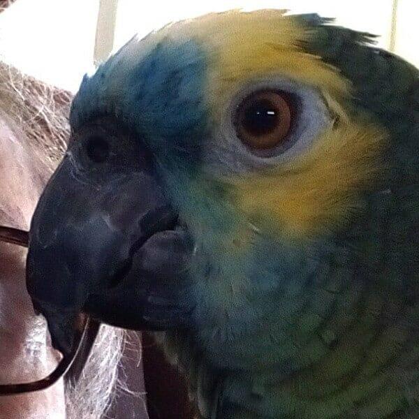 How Do I Fix My Amazons Broken Beak?