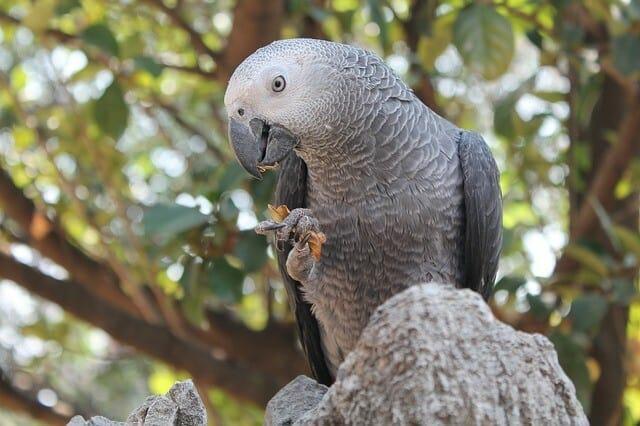 Should I Switch From Harrisons Pellet Bird Food?