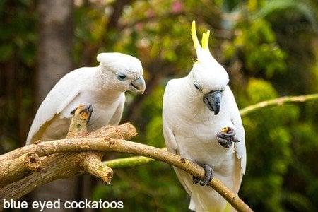 We Explore 4 Cockatoos Each With Unique Nutritional Needs