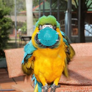 Can I Give My Bird the Coronavirus? YES! Part 2