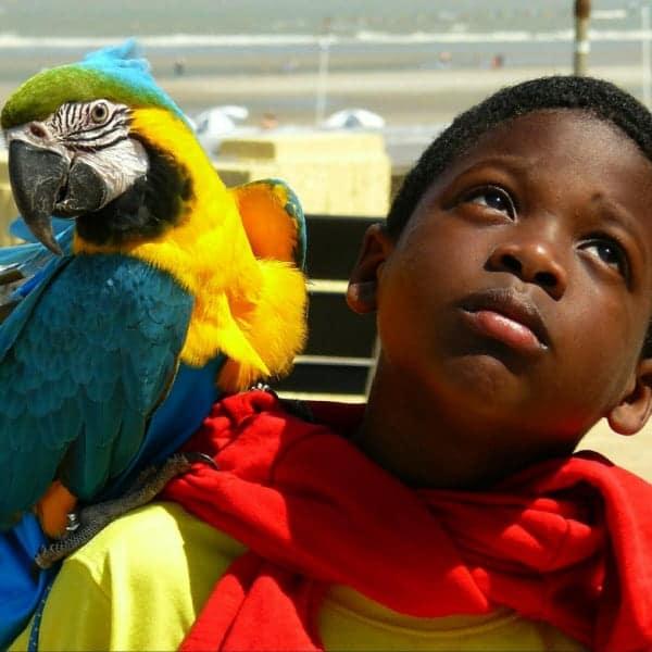 Birds as disposable pets