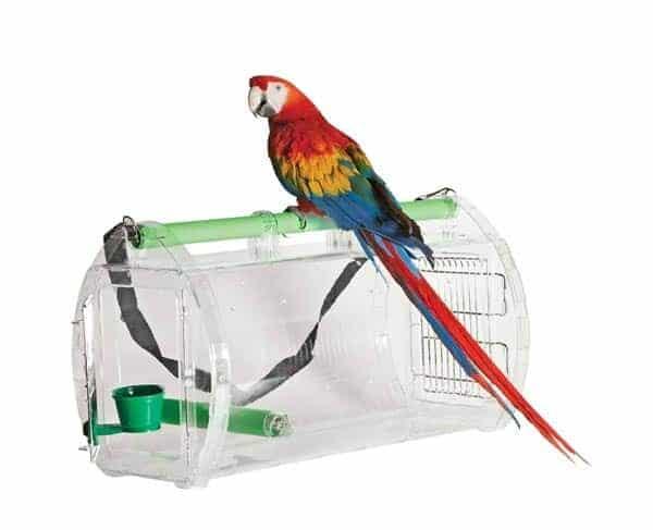 Caitec carrier macaw