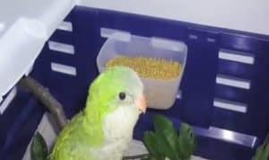 Great bird food pellet conversion tip from hagen