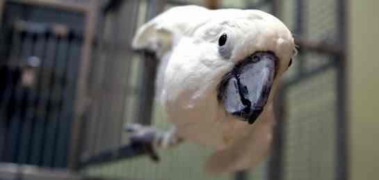 Bird cage bar spacing & perch diameter