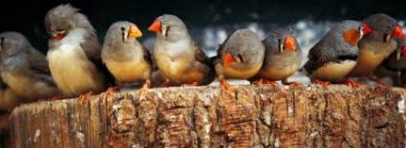 Windy City Parrot Defines the Smallest Species of Captive Birds