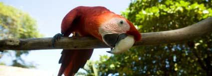 Why Parrots Need Bird Toys