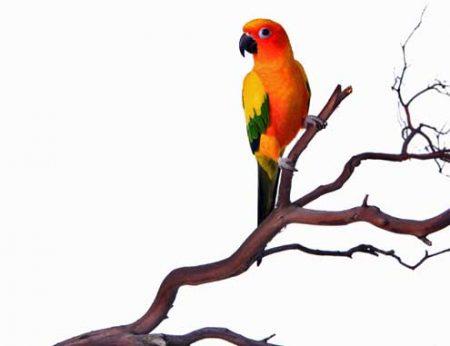What's Manzanita & Why are Manzanita Perches Good for My Bird?