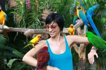 Multiple Birds Sharing the Same Bird Cage