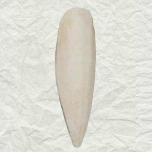 Cuttlebones A Natural Calcium Source for Birds Medium 2 Piece