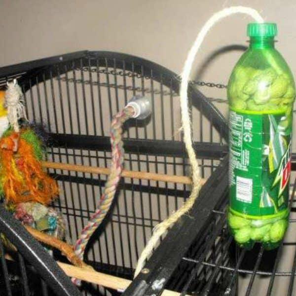 Facebook free bird toy sodabottle 1