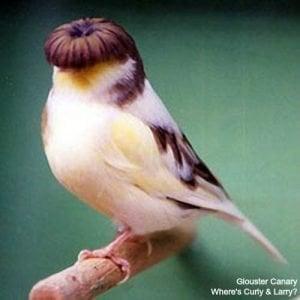 Canary/Finch Food