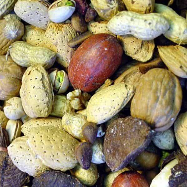 Higgins sunburst in shell gourmet boca nuts parrots 9. 072 kg 20 lb 2