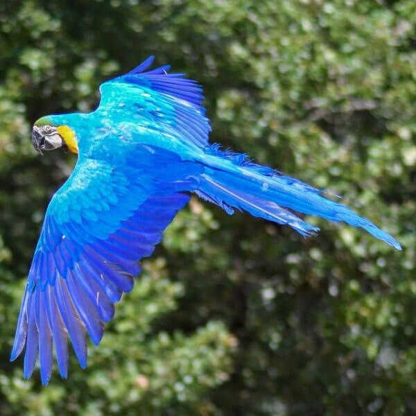 Can small birds fly higher than bigger birds?