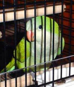 Joke about parrots and jesus