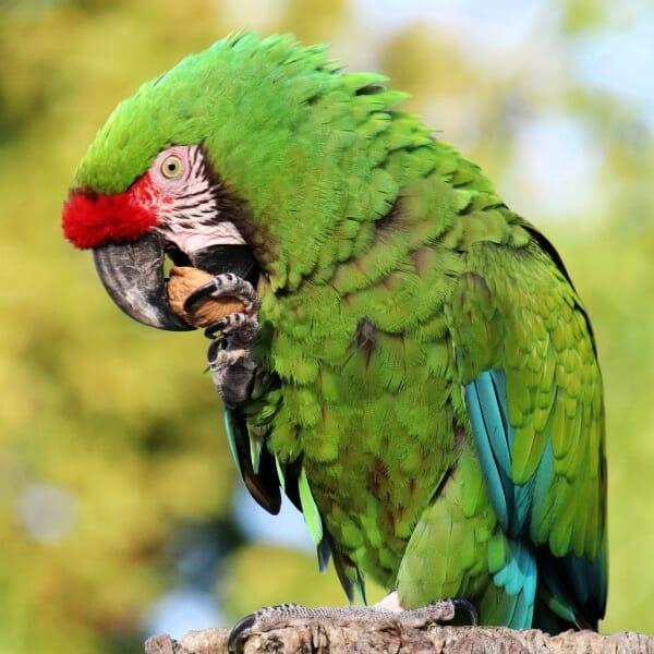 Does my pet bird need additional vitamins?