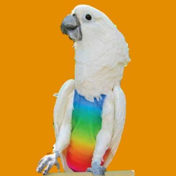 Rainbow pattern flightsuit cockatoo parrot 50