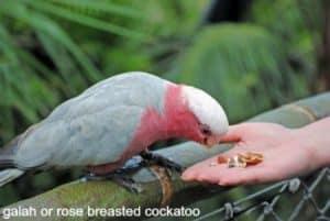Parrot & Bird Food Manufacturers Explained