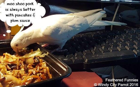 Why Won't My Cockatiel Eat Sunflower Seeds?
