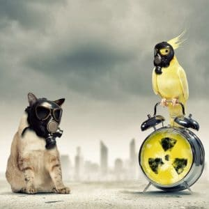 sitting cat with respirator yellow cockatiel with respirator perching on hazard alarm clock
