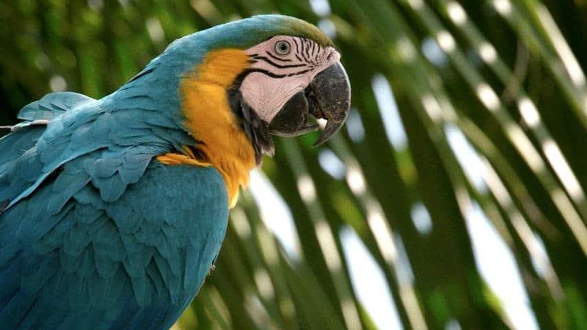 Miami's 'Parrot-Poaching' Problem
