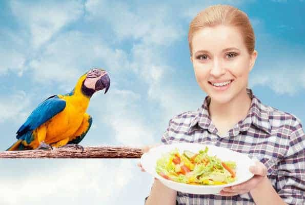 Bird chop vs commercial bird food blends – what's best for my bird?