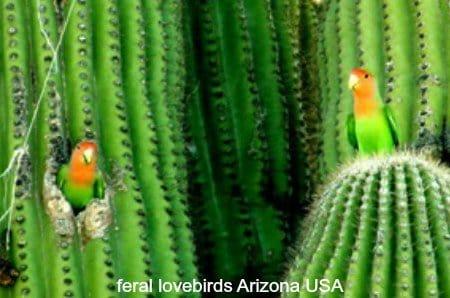 Those Lovable Lovebirds – 9 Lovebird Videos