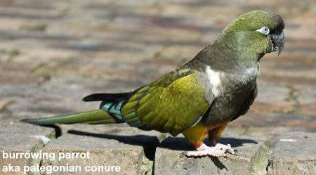 How do parrots avoid predators in the wild?
